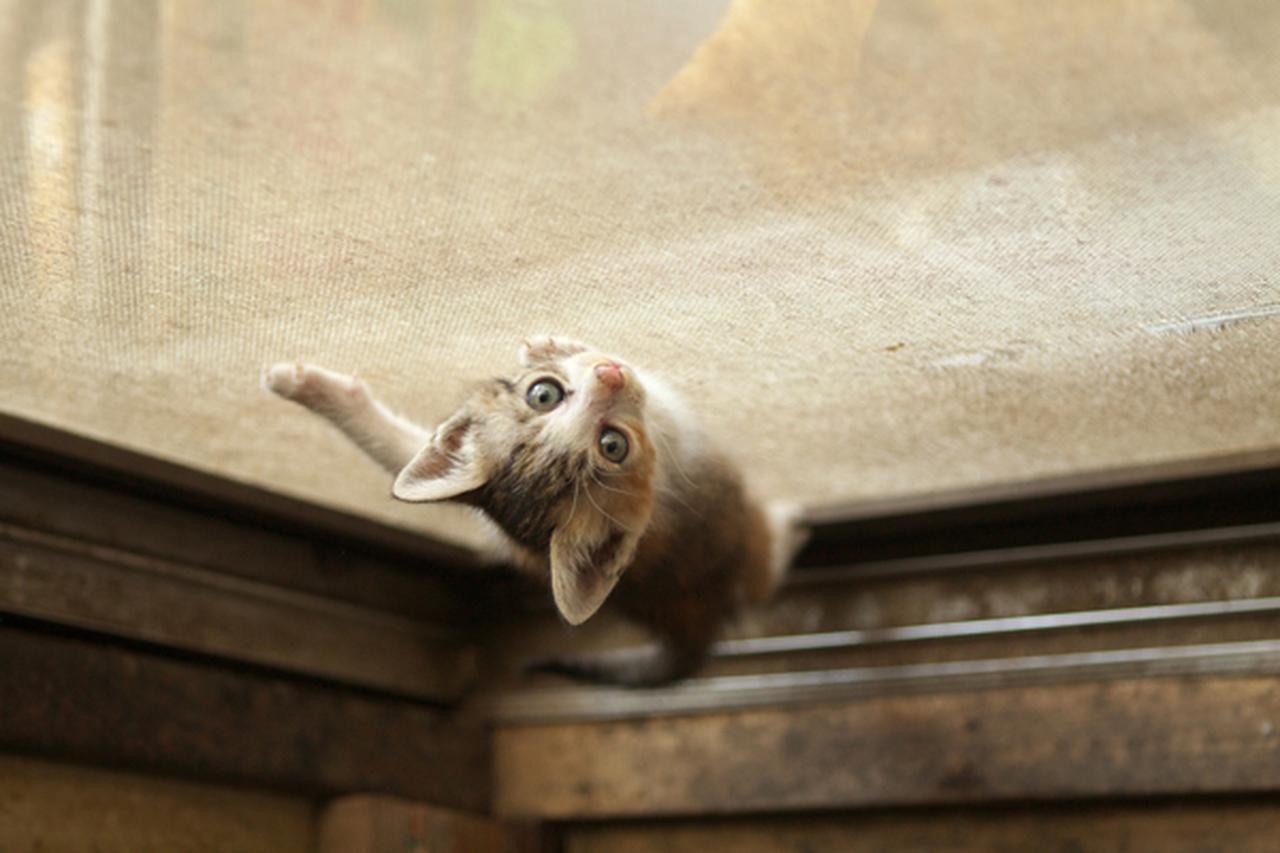 画像11: 曽根原昇さん「ネコとウシの穏やかな関わり」