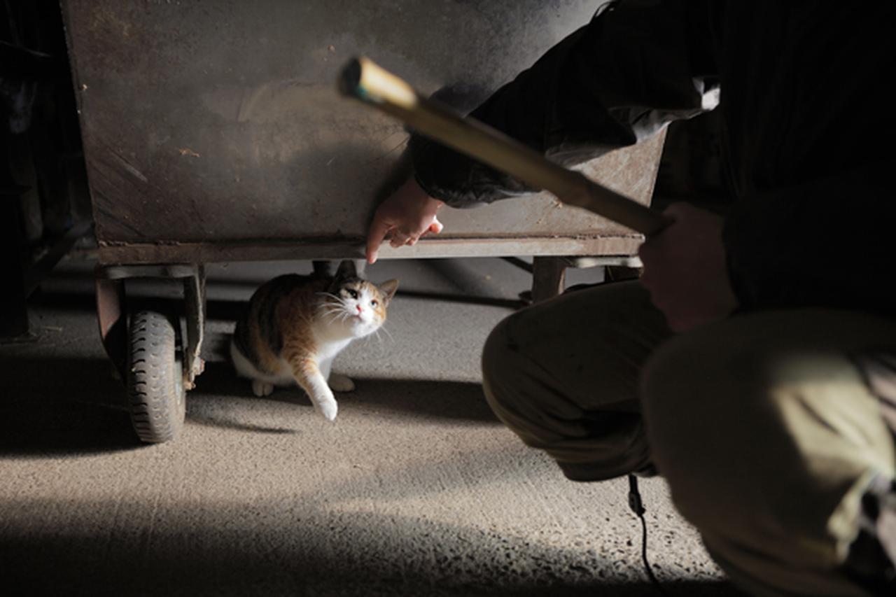 画像4: 曽根原昇さん「ネコとウシの穏やかな関わり」