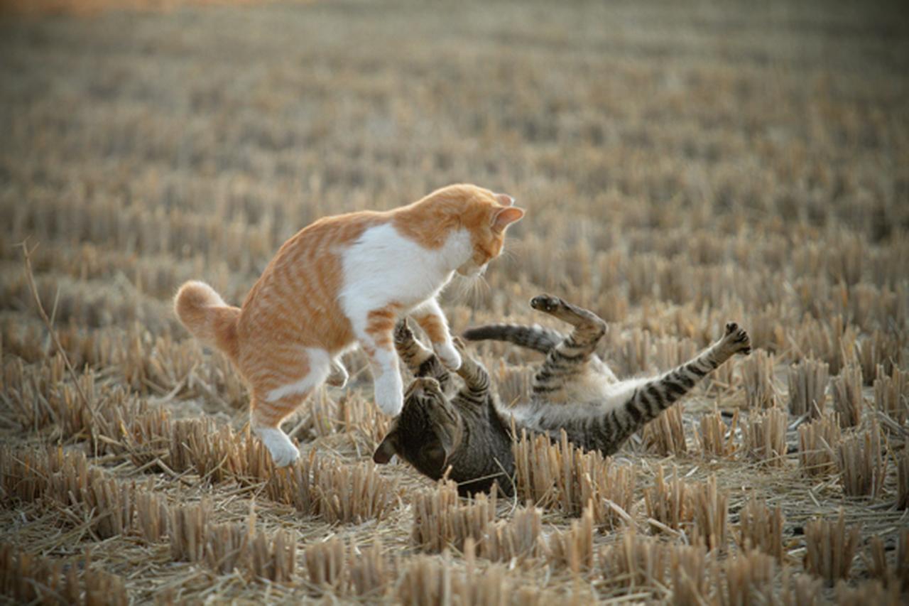 画像8: 曽根原昇さん「ネコとウシの穏やかな関わり」