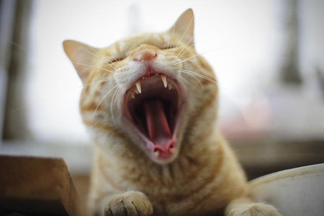 画像12: 曽根原昇さん「ネコとウシの穏やかな関わり」