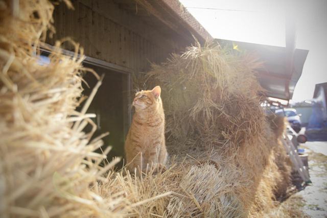 画像2: 曽根原昇さん「ネコとウシの穏やかな関わり」