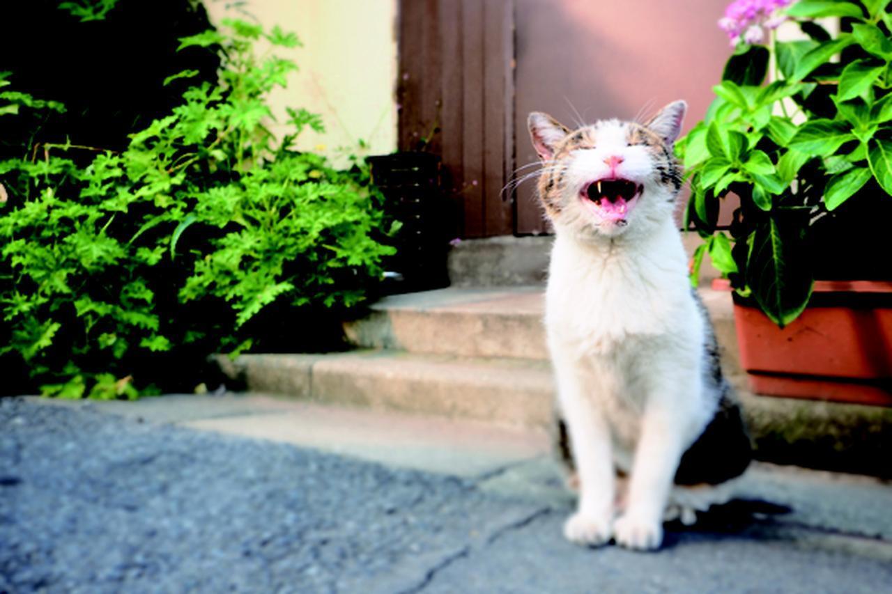 画像8: 金森玲奈さん「街猫日和」