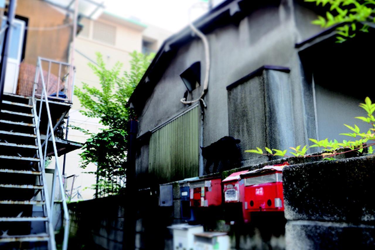 画像11: 金森玲奈さん「街猫日和」