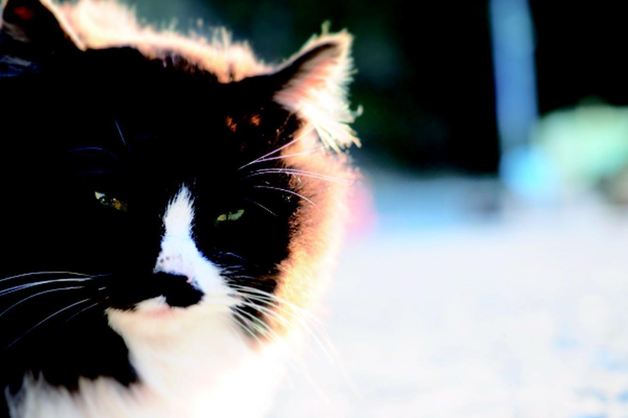 画像3: 金森玲奈さん「街猫日和」