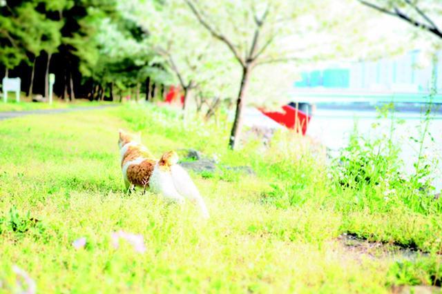 画像4: 金森玲奈さん「街猫日和」