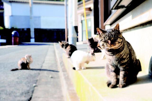 画像1: 金森玲奈さん「街猫日和」