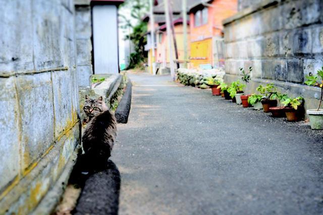 画像12: 金森玲奈さん「街猫日和」