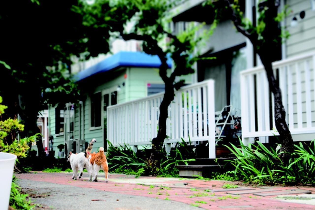 画像6: 金森玲奈さん「街猫日和」