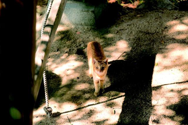 画像3: 湯沢祐介さん「島ねこ」