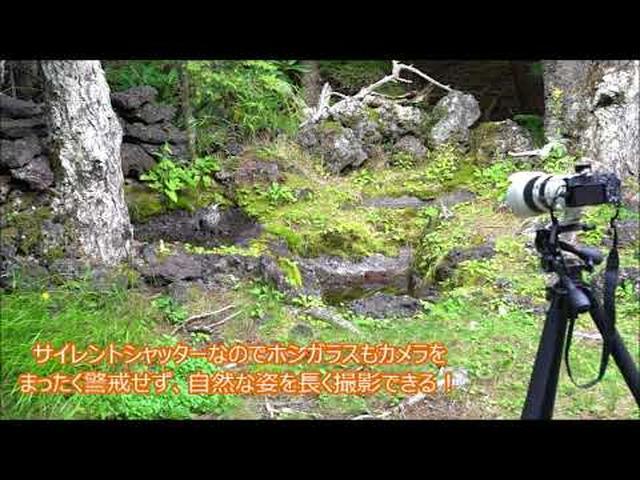 画像: 月刊カメラマン2017年12月号「ソニーα6500で軽快に野鳥を撮る!」 youtu.be