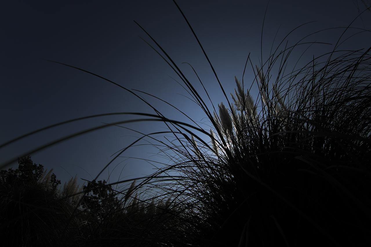 画像: ▲パンパスグラスの長く伸びた葉に美を感じた。魚眼レンズによる遠近感と極端なアンダー露出でシルエットにすることで、葉の長さとラインの印象をより強く見せることができた。 ■ EF8-15mmF4L フィッシュアイ 絞りF5.6 マイナス2 露出補正 WB:太陽光