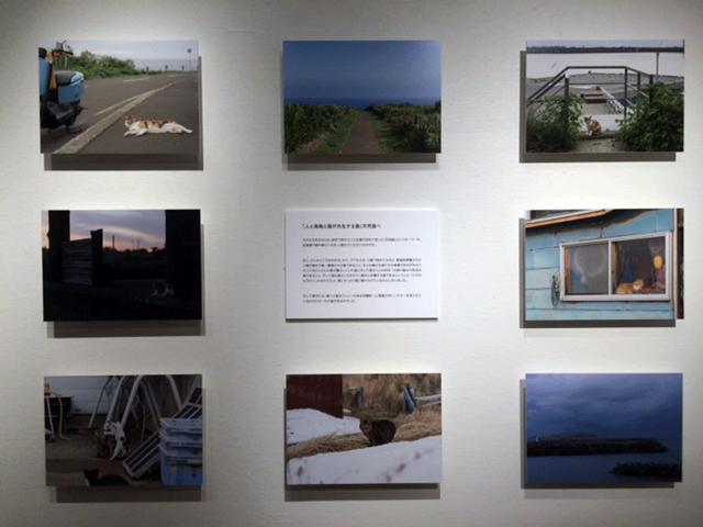 画像1: 石原さくら作品展『天売島 最北の猫の島 ~'17冬・夏の記録~ ねこかぶり』は、ソニーイメージングギャラリー銀座で今月14日まで、です!