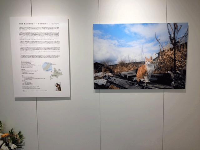 画像2: 石原さくら作品展『天売島 最北の猫の島 ~'17冬・夏の記録~ ねこかぶり』は、ソニーイメージングギャラリー銀座で今月14日まで、です!