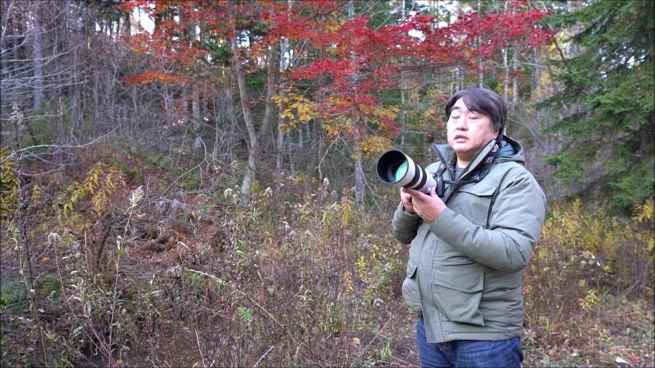 画像: 2018年1月号、小原玲がソニーα9でシマエナガを撮る! www.youtube.com