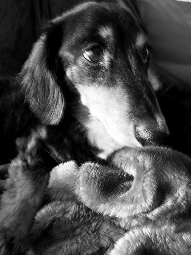 画像: ダメなスローシンクロといわれればそれまで。んが、飼い主的には十分OK。よそのお宅のイヌなら無視するはず。