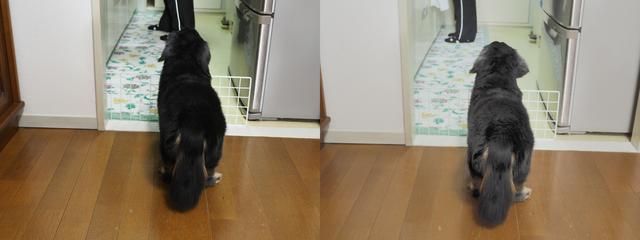画像: 階調が出ている、というよりはクロの締まりがない、というだけの気がしないでもない。