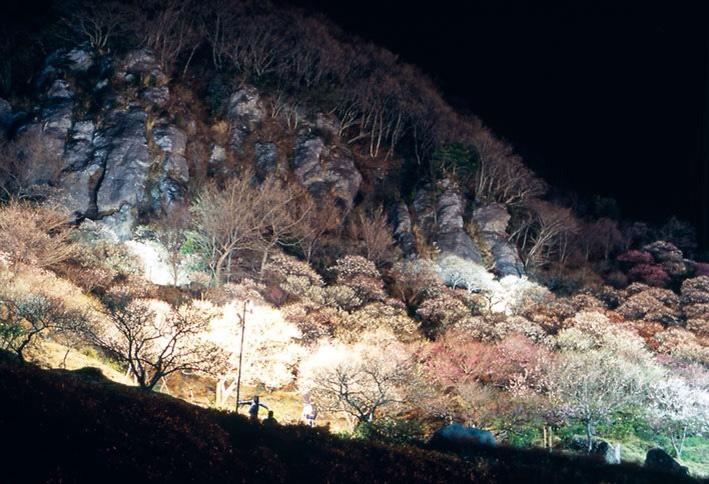画像: 見頃を迎える2月下旬~3月上旬の短期間に開催するライトアップイベントは、日中の梅林とは異なり、園内が幻想的な雰囲気に包まれる。