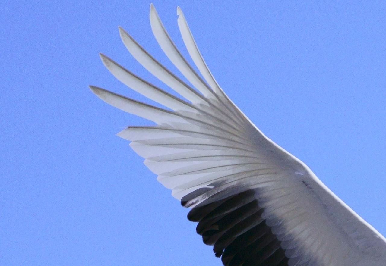 画像: ▲写真を拡大してもタンチョウの羽根の先端を精細に描写していることがわかる。