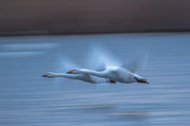 画像: 作品タイトル「飛躍」。撮影:堀井 学さん