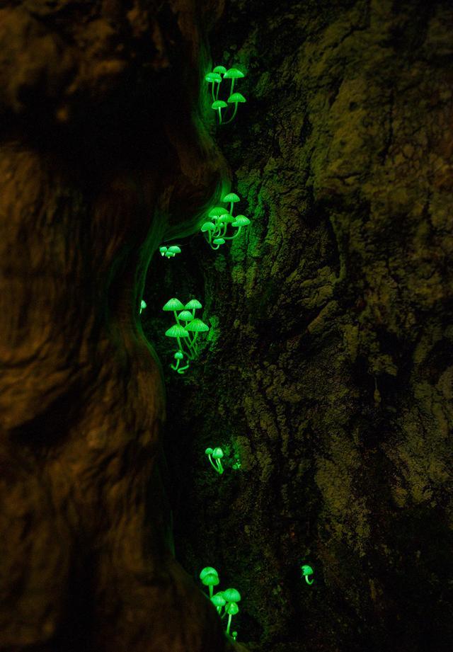 画像: ネイチャー部門 最優秀賞作品「森の小宇宙」(3/4) natgeo.nikkeibp.co.jp