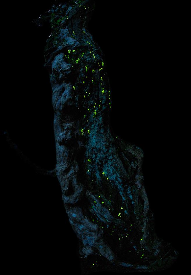 画像: ネイチャー部門 最優秀賞作品「森の小宇宙」(2/4) natgeo.nikkeibp.co.jp