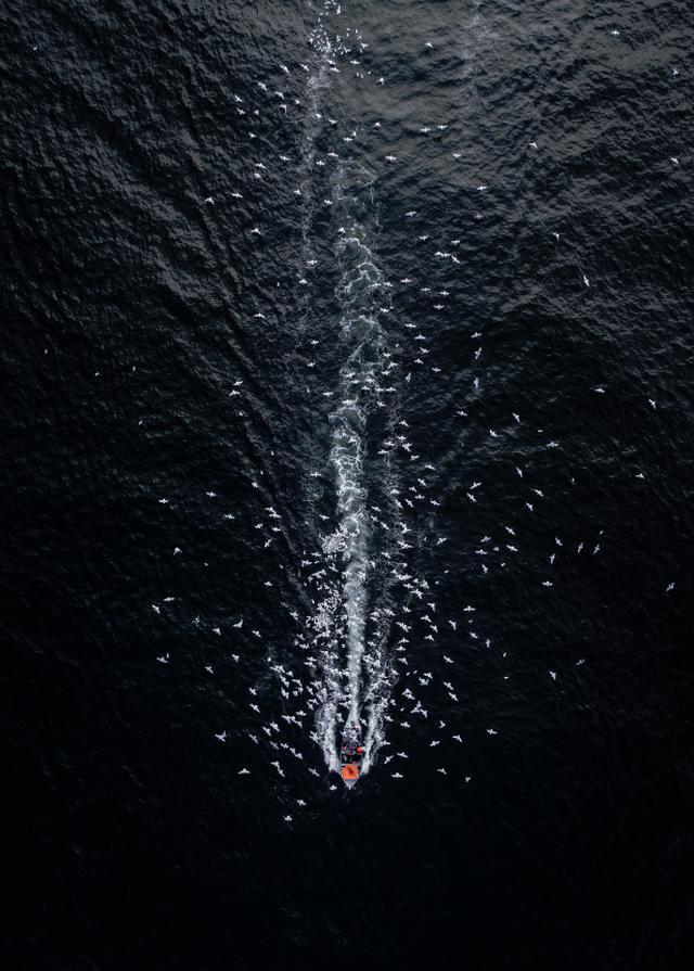 画像: 「ニューファンドランドの早朝、東海岸をハイキングしていたときにカモメの大群が騒いでいた。ドローンを素早く起動して、騒ぎの様子を観察してみると…港に向かう小さなタラの釣り船が原因だった。不思議な瞬間である」 ■焦点距離8.8mm 絞りF3.2 1/320秒 www.skypixel.com