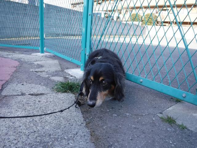 画像: 片手はイヌのリードを持っているので、どうしても不安定になりがち。バリアングルじゃないと、こういう時に苦しいですね。