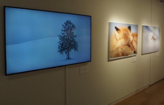 画像: 今回の展示では、National Geographicの受賞作品や写真集などに掲載された作品の他にプリント作品としてこれまでに展示したことがない8作品が展示される(大サイズプリント作品全14点、TV画面1台)。