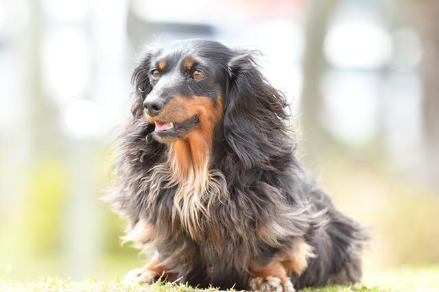 画像: 【露出補正なし】全体のイメージとしては明るくて爽やかなのですが、主役の犬の毛の色は実際よりも白っぽく写っています