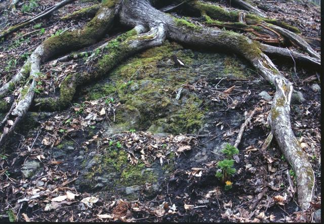 画像: タイトル:地を這う命