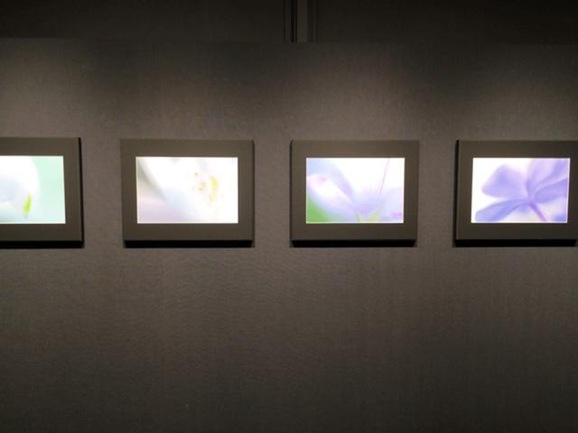 画像2: 山田久美夫写真展『feel flower』。はい、本当に見ているだけで花の美しさも息吹も感じられる、そんな展示となっています。まるで抽象画を観ているような、ふんわりと柔らかく優しいタッチが心に染みます。