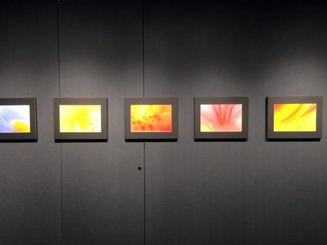 画像1: 山田久美夫写真展『feel flower』。はい、本当に見ているだけで花の美しさも息吹も感じられる、そんな展示となっています。まるで抽象画を観ているような、ふんわりと柔らかく優しいタッチが心に染みます。