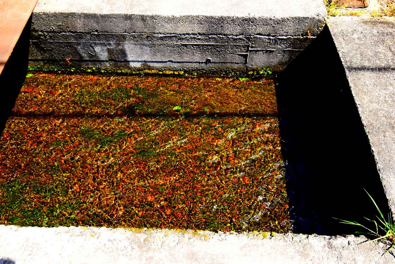 画像: タダの用水路の水が七味唐辛子みたい! それにしても輝度差ありすぎ。