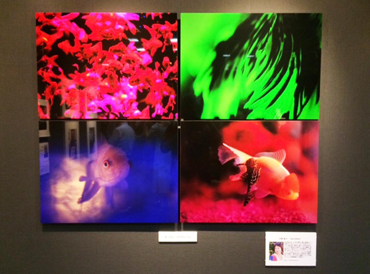 画像: カメラマン編集部OG、水咲奈々さんのキンギョの作品も展示中。