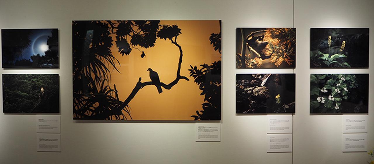 画像3: MANA 野元 学「PLANET BONIN – 楽園の記憶 -」 ●ソニーイメージングギャラリー銀座●6月8日~21日
