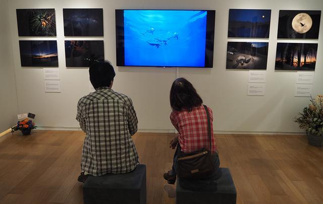 画像1: MANA 野元 学「PLANET BONIN – 楽園の記憶 -」 ●ソニーイメージングギャラリー銀座●6月8日~21日
