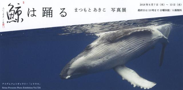 画像: まつもと あきこ 写真展「鯨は踊る」 ●2018年6月13日まで ●シリウス(新宿)
