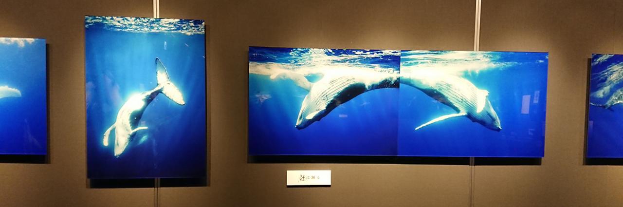 画像: 「広角レンズで撮影しているので、クジラとの距離はぶつかりそうなぐらい近いんです」(まつもと)