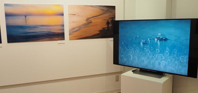 画像: 湘南の海の魅力を様々な手法で切り取った作品群