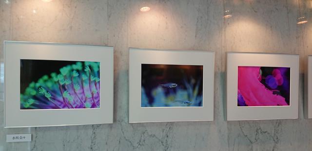画像: Webカメラマンに連載中の「生徒諸君!」も好評の水咲奈々さんの作品。まさに水族館気分で作品を鑑賞できます。