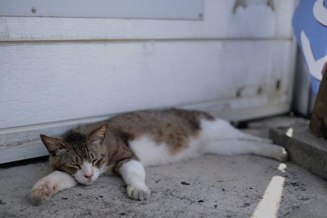 画像: WB:オート 日陰なので見たままに近い色だけど、ネコのお腹の毛は実際はもっと白くてフワフワしていました。