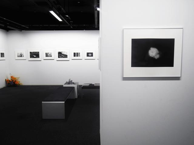 画像: 平林達也写真展『白い花-Desire is cause of all thing』。写真としっかり真面目に向き合ってきた作者の作品には風格と風合いが漂います。
