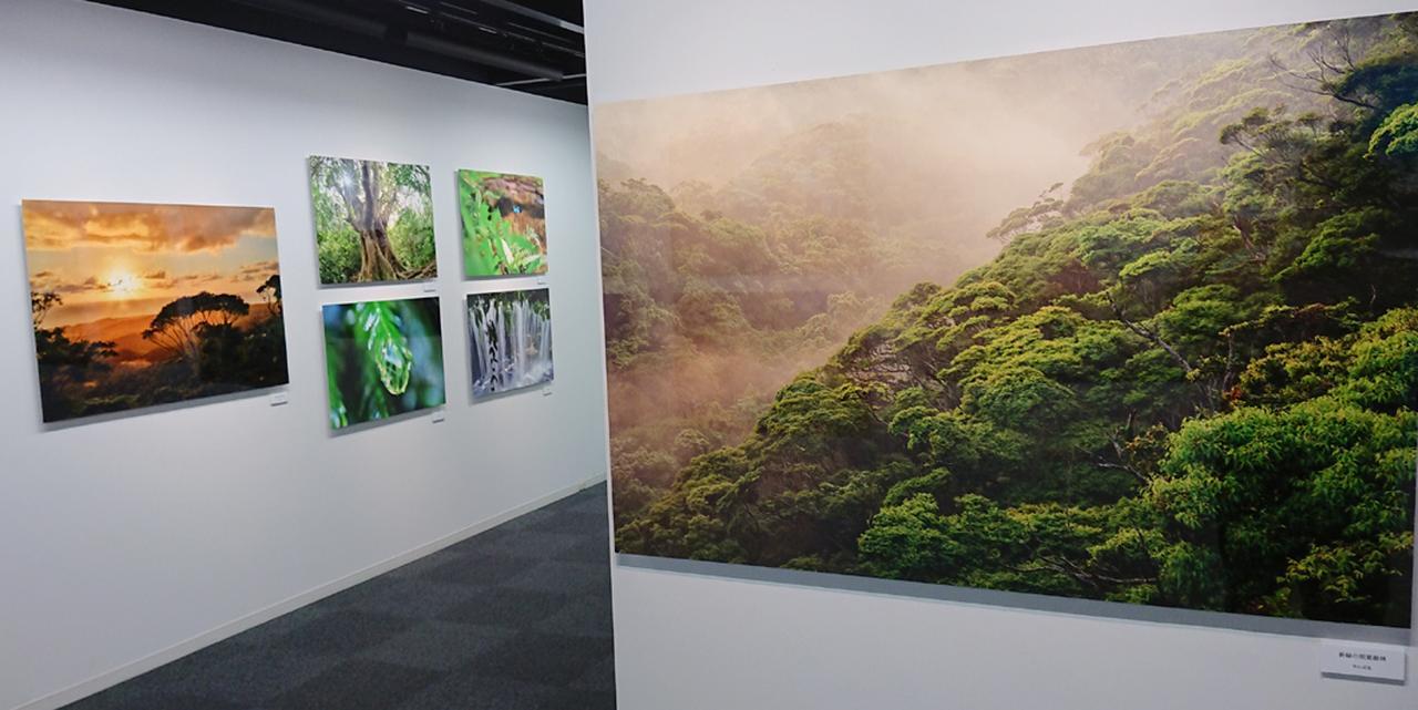 画像: 作品は自然風景にとどまらず、野鳥やカメといった野生動物も数多く展示されている。