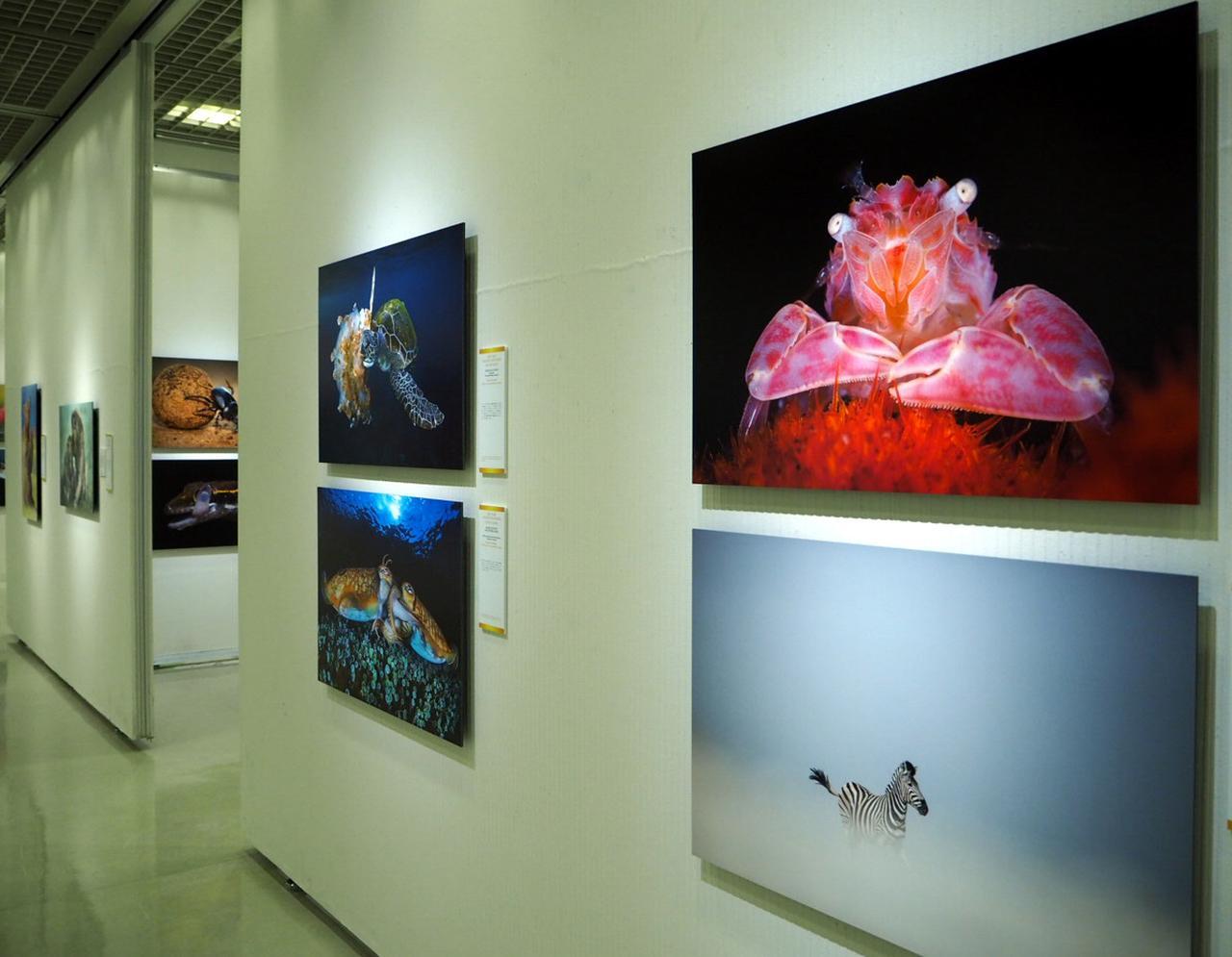 画像: 広い会場に、世界中から応募された作品の中から厳選された入選作品が展示されている。 naturesbestphotography.asia