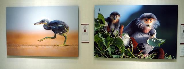 画像3: naturesbestphotography.asia