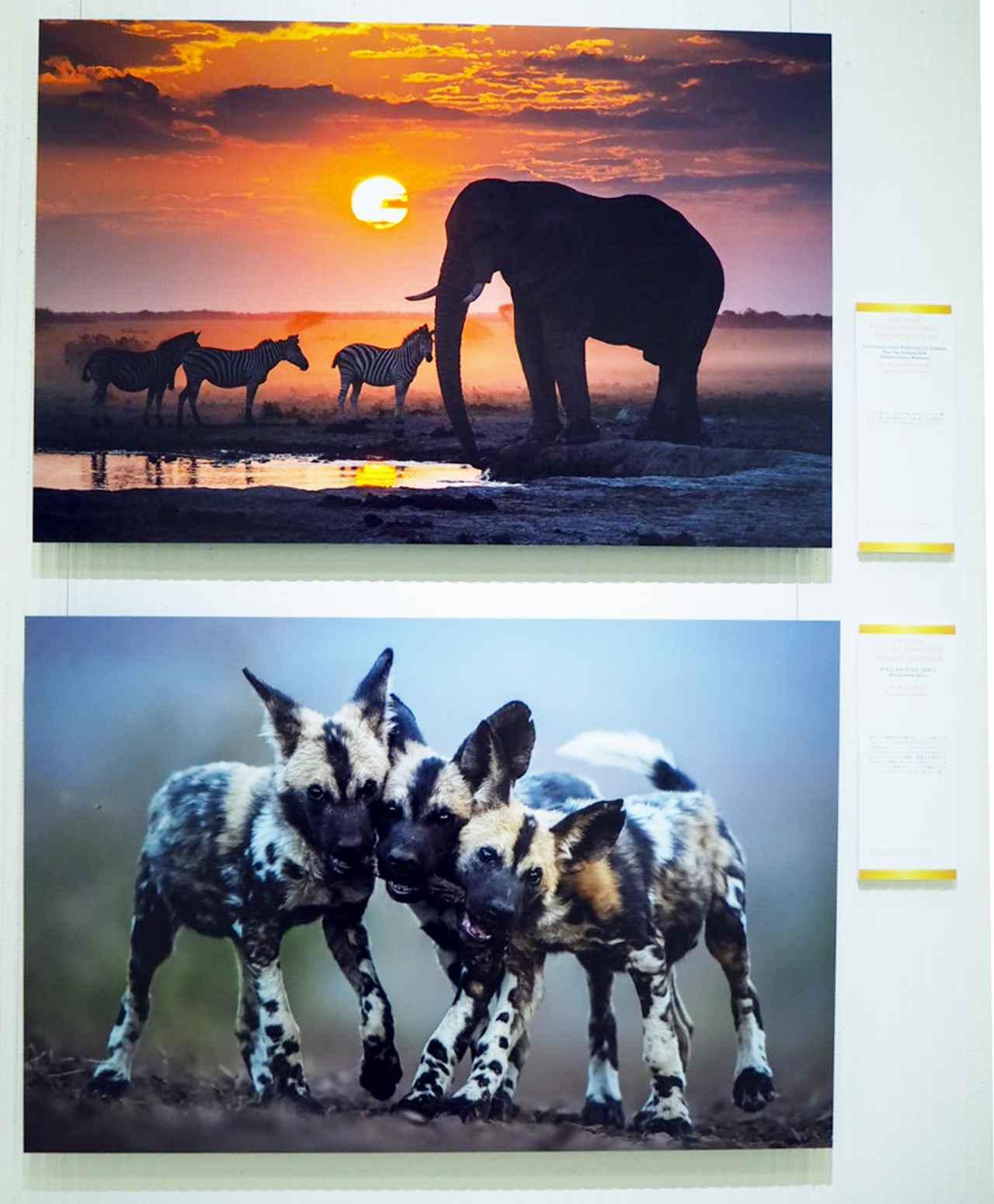 画像2: naturesbestphotography.asia