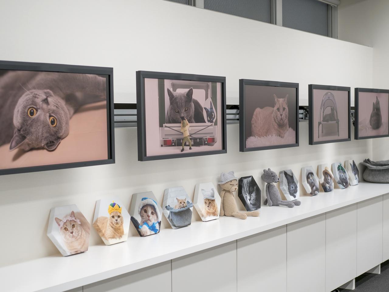 画像: 猫好きは必見! #ねこまみれ4 坂井田富三 写真展 は9月15日まで