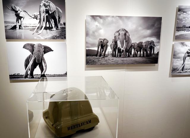 画像: ウィル・ブラード・ルーカス 作品展「Wildlife as Never Seen Before」 ●開催中~10月4日(木) Sony Imaging Gallery