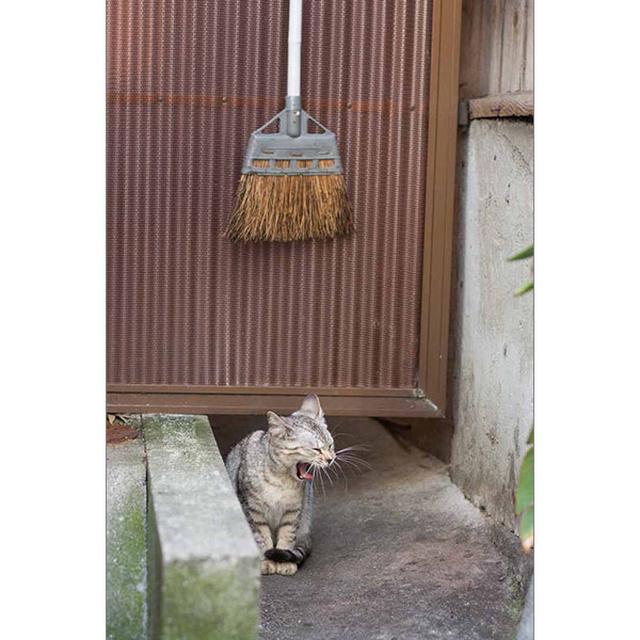画像24: 今年も始めます!特製カレンダーです! ~猫カレンダー特集~