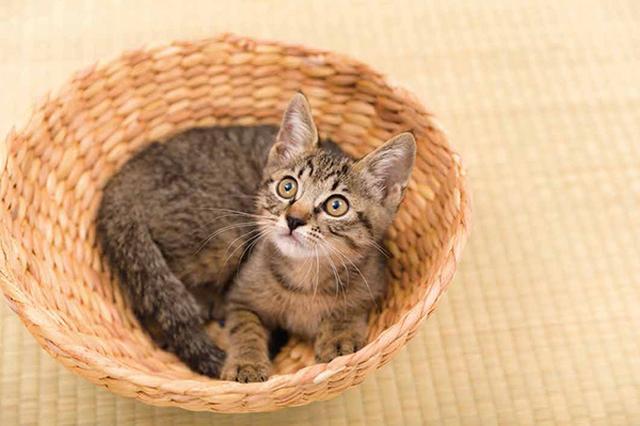 画像35: 今年も始めます!特製カレンダーです! ~猫カレンダー特集~